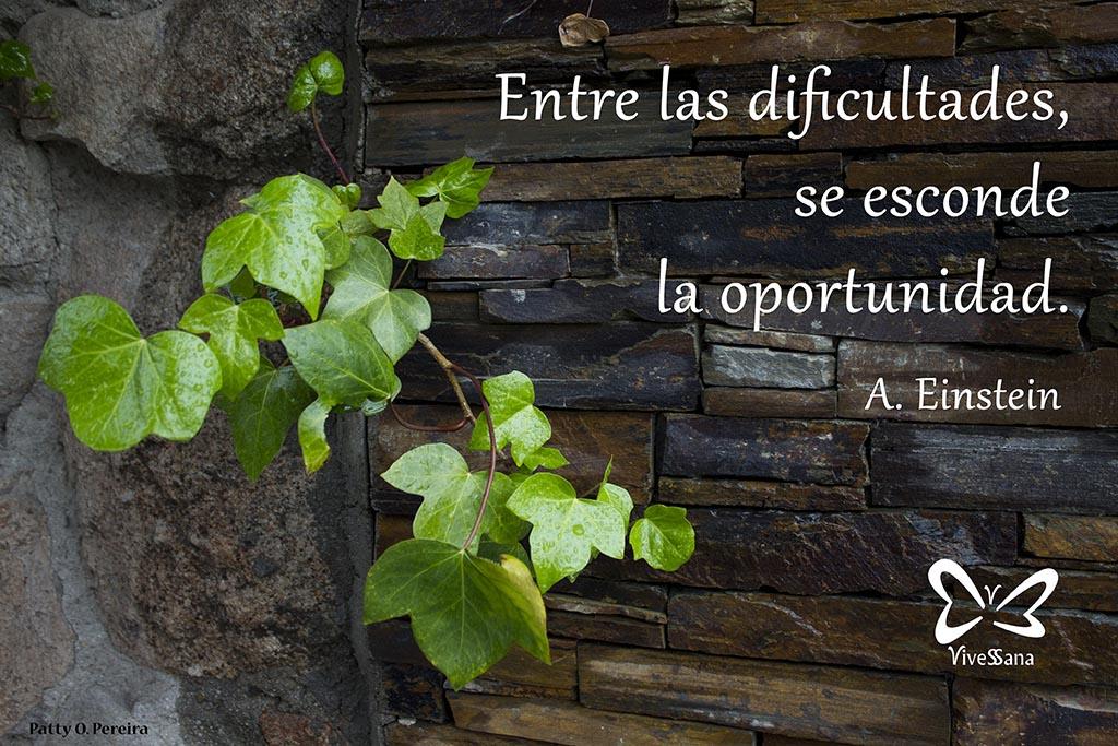 Entre las dificultades se esconde la oportunidad. vivessana